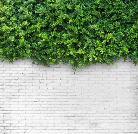 3 conseils sur le mur végétal sur balcon ou terrasse